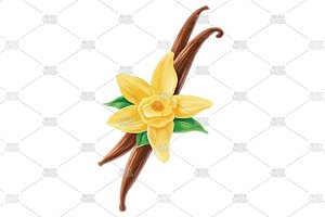 Vanilla stick leaves flower