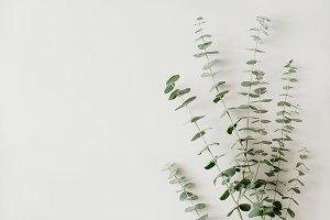 Minimalist floral white background