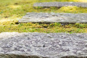 Stone Path on Green Spring Moss