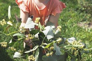 Little girl hold Linden blossom