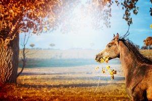Horse at autumn nature