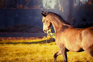 Horse keeps autumn branch