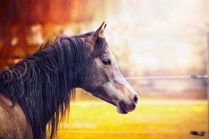 Horse portrait at autumn nature