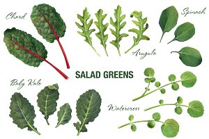 Salad Greens Pencil Illustration Set