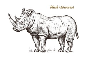 African rhinoceros Wild animal