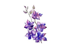 Bouquet of purple flowers PNG set