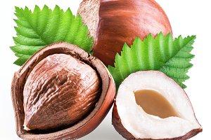 Hazelnuts and hazelnut leaves isolat