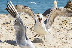 flock of white gulls