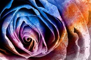 Vibrant Acrylic Rose
