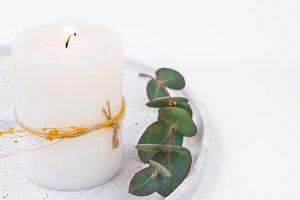 White candle eucalyptus branch