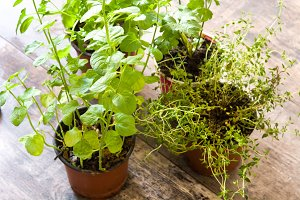 Pots with aromatic herbs