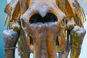rhino skeleton mock