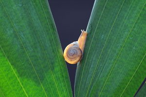 snail, slug,
