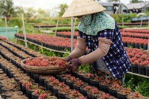 Closeup vietnamese farmer working wi