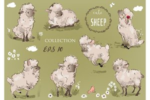 cute sheeps collection