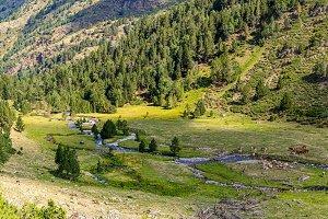 Catalan Pyrenees Landscape