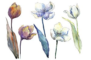 White tulips PNG watercolor flower