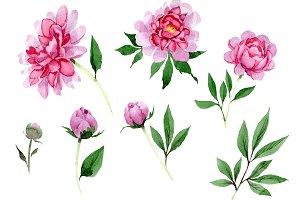 Tender pink peony PNG watercolor set