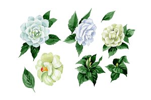White camellia wildflower PNG set