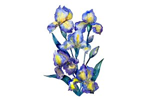 Bouquet of blue irises PNG set