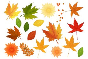 Autumn vector leaves and flowers