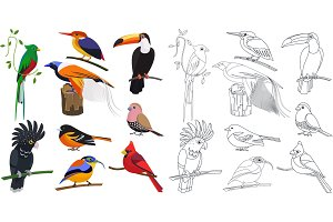 Flat and line tropical exotic birds