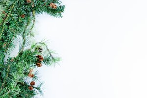 Fir Branch with with background