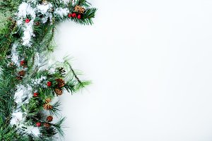 Snow covered fir on white background