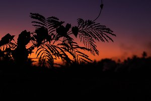 Silhouette of palm trees at tropical
