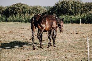 rear view of beautiful black horses