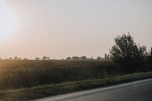 scenic view of rural road and meadow