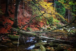 Autumn Forest Creek With Fallen Tree