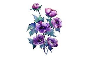 Bouquet of purple poppy PNG set