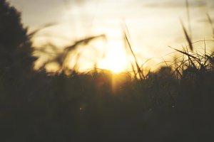 Sun Through the Tall Grass