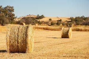 Big  round bales of straw, sheaves