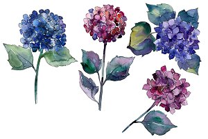 Hydrangea purple and blue PNG set