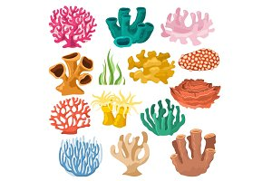 Coral vector sea coralline or exotic