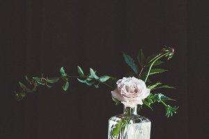 Dark and Moody Flowers