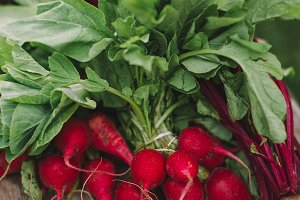 Very Red Radishes on the Farm