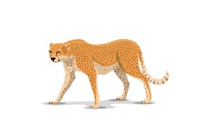 Cartoon cheetah wild animal, vector
