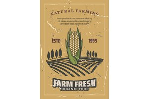 Corn vegetable harvest, retro vector