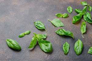leaves Green basil on old rusty dark