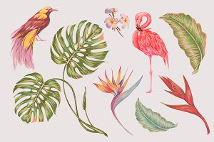 Tropical floral vector illustrations