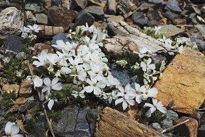 Mountain Wildflowers 01