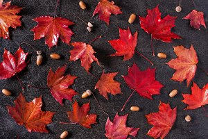 Pattern of red bright maple leaves