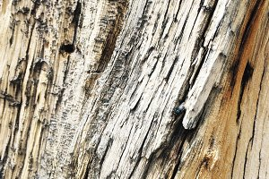 Wood Texture 04