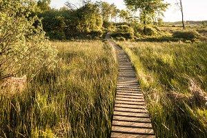 Walking the path...