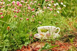 Cup of tea in grass