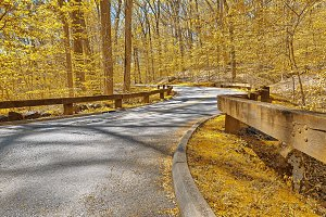 Gold Forest Road