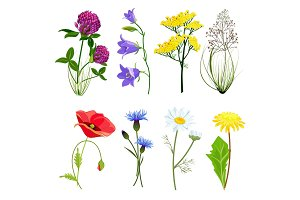 Wildflowers and herbs. Botanical set